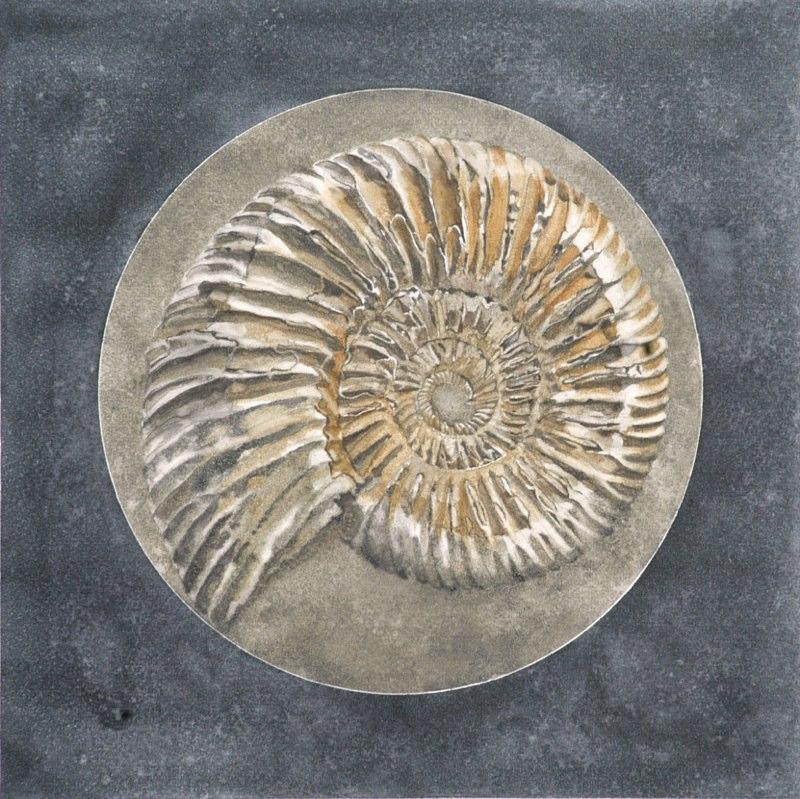 Ammonite 39 x 39cms, Lynda Bird Clark