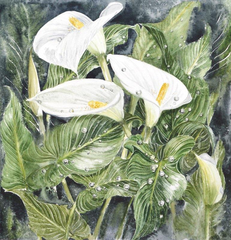 Arum Lillies, Lynda Bird Clark