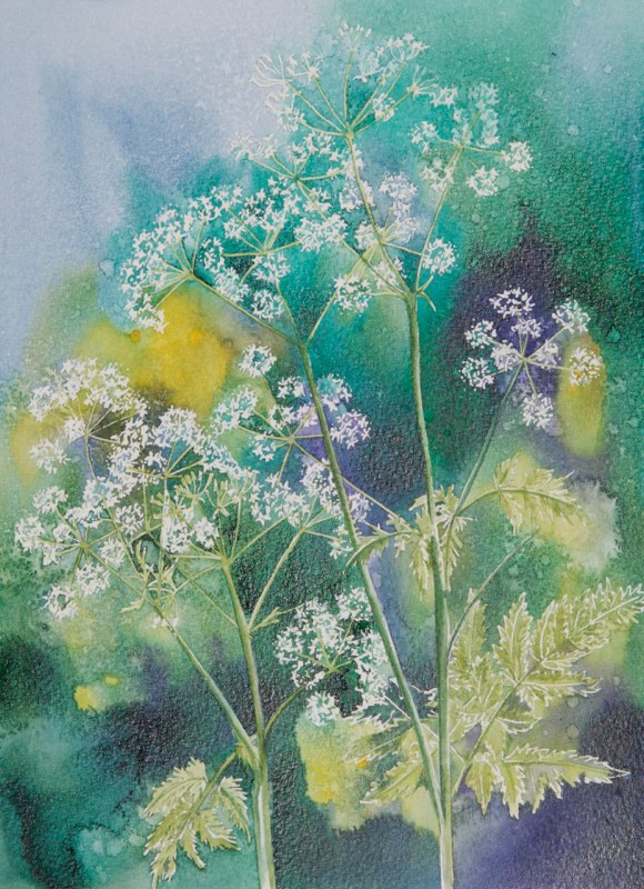 Cow Parsley, Lynda Bird Clark