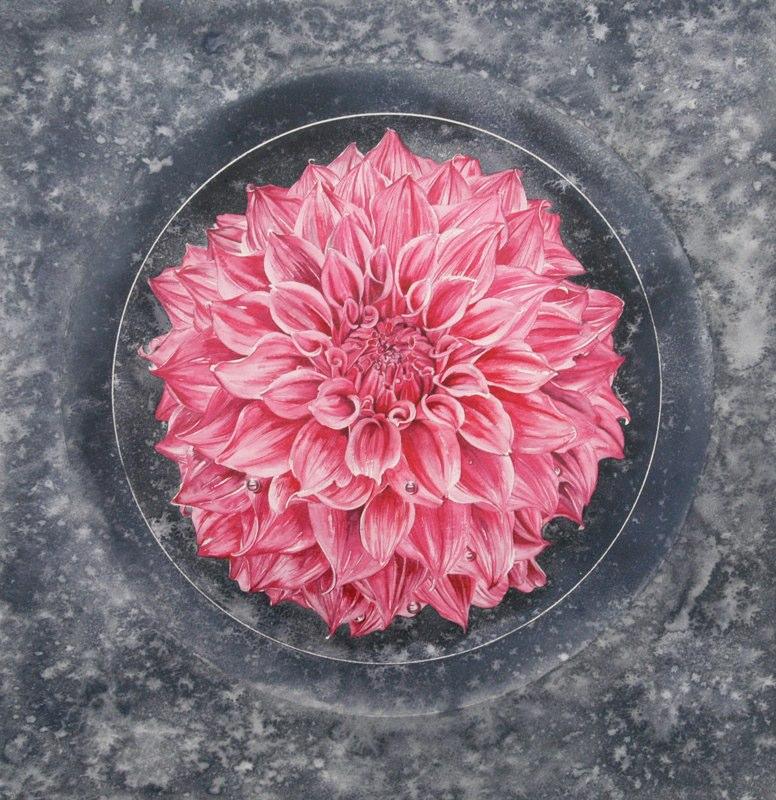 Dahlia 46.5 x 47cms, Lynda Bird Clark