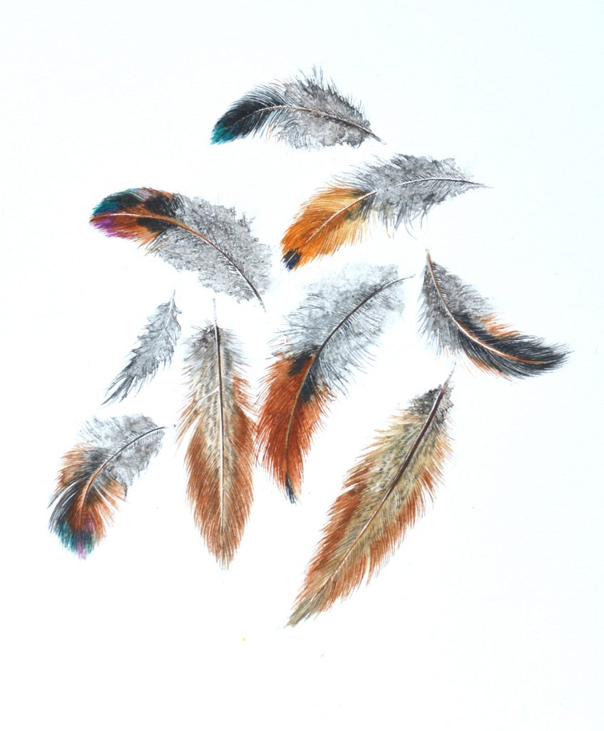 Feathers, Lynda Clark, Artist