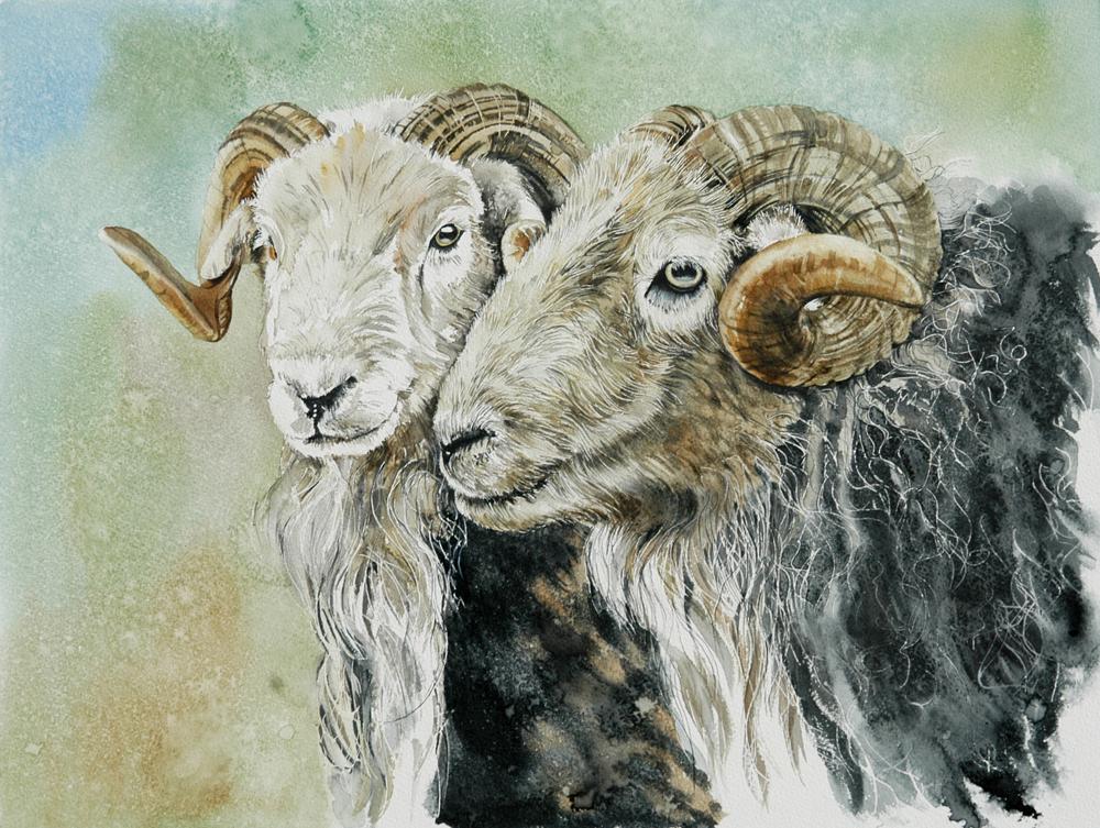 Hurdwick Rams, Lynda Clark, Artist