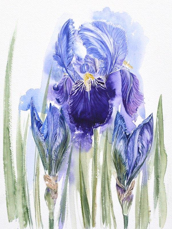 Iris 2, Lynda Bird Clark