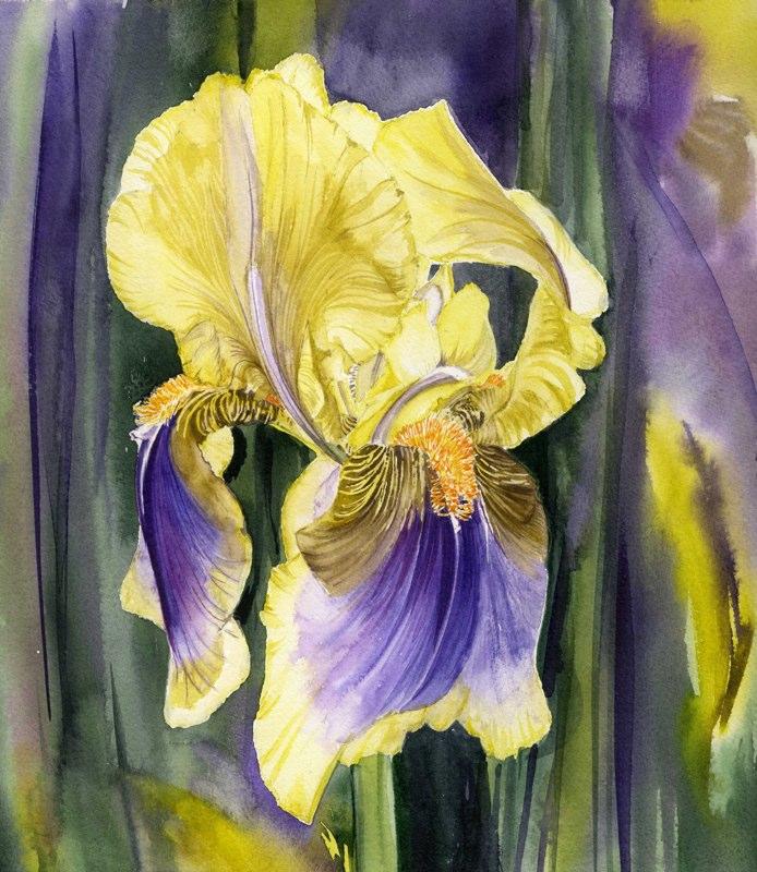 Iris 3, Lynda Bird Clark