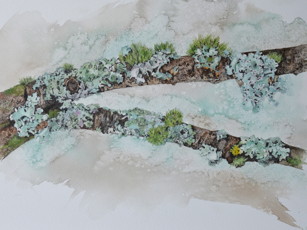 Lichen on Chestnut, Lynda Bird Clark