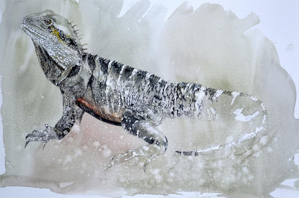 Lizard, Lynda Clark, Artist