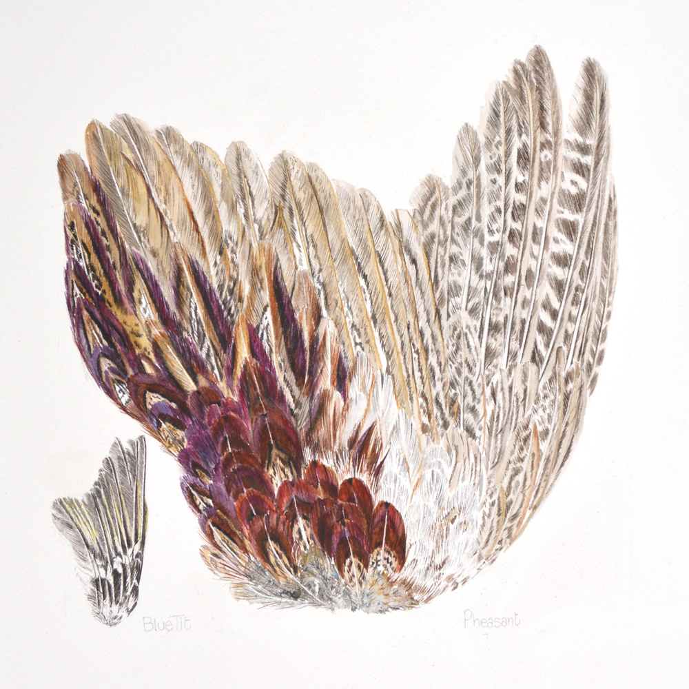 Pheasant and Tit, Lynda Clark, Artist