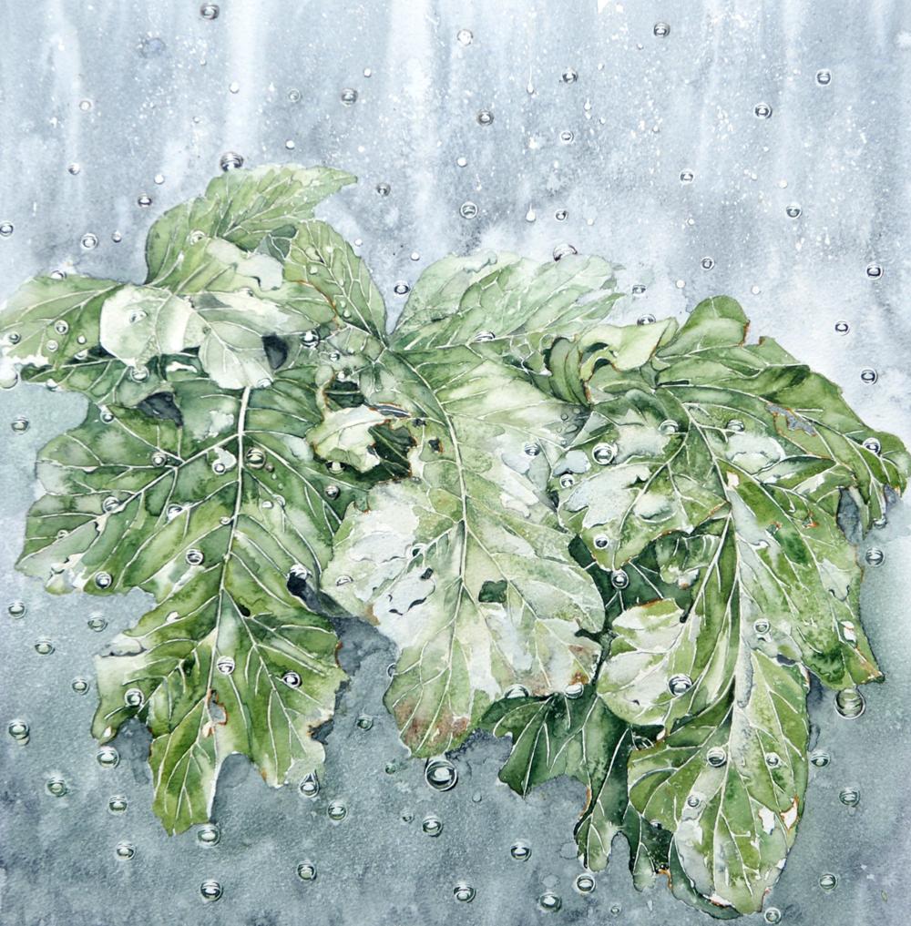 Rain on Acanthus, Lynda Bird Clark