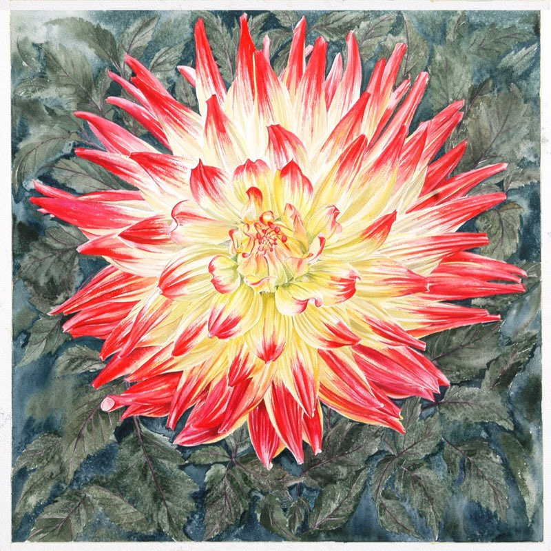 Red & Yellow Dahlia 51.5 x 51.5cms, Lynda Bird Clark