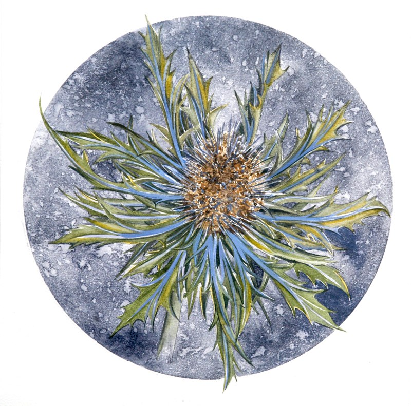 Sea Holly 19.5 x 19.5cms, Lynda Bird Clark