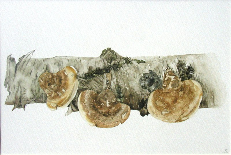 Silver Birch 36 23.5cms, Lynda Bird Clark