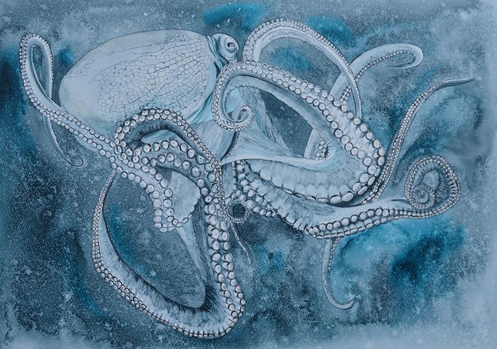 Squid Ink, Lynda Bird Clark
