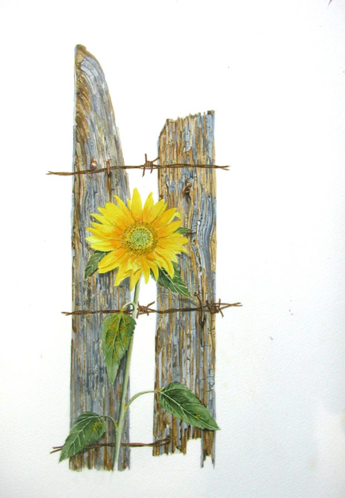 Sunflower and Wood, Lynda Clark, Artist