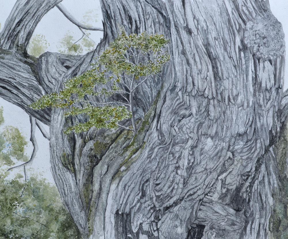 Symbiotic Commensalism, Lynda Clark, Artist