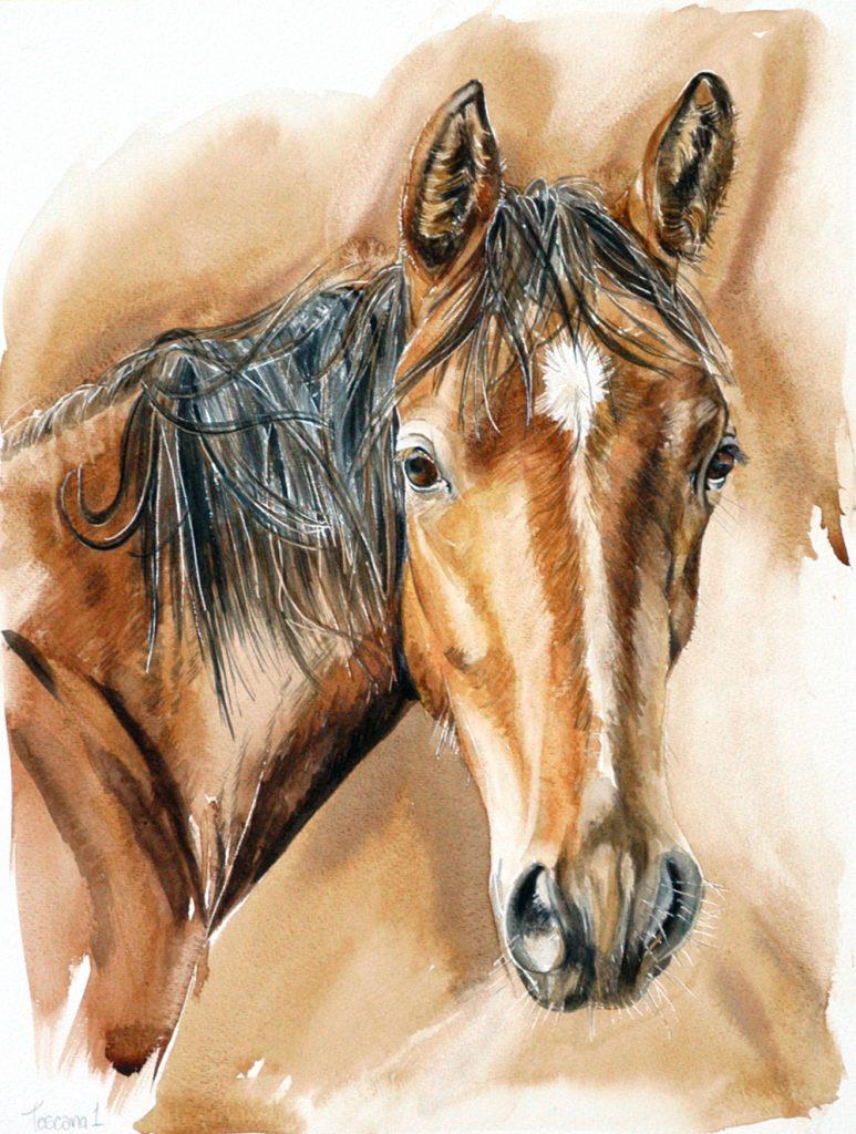 Toscano 1, Lynda Clark, Artist