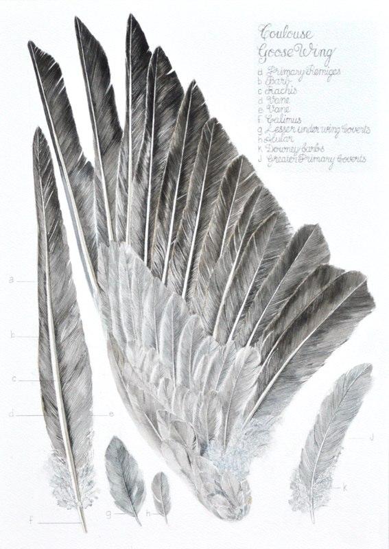 Goose Wing 33 x 48cms, Lynda Bird Clark