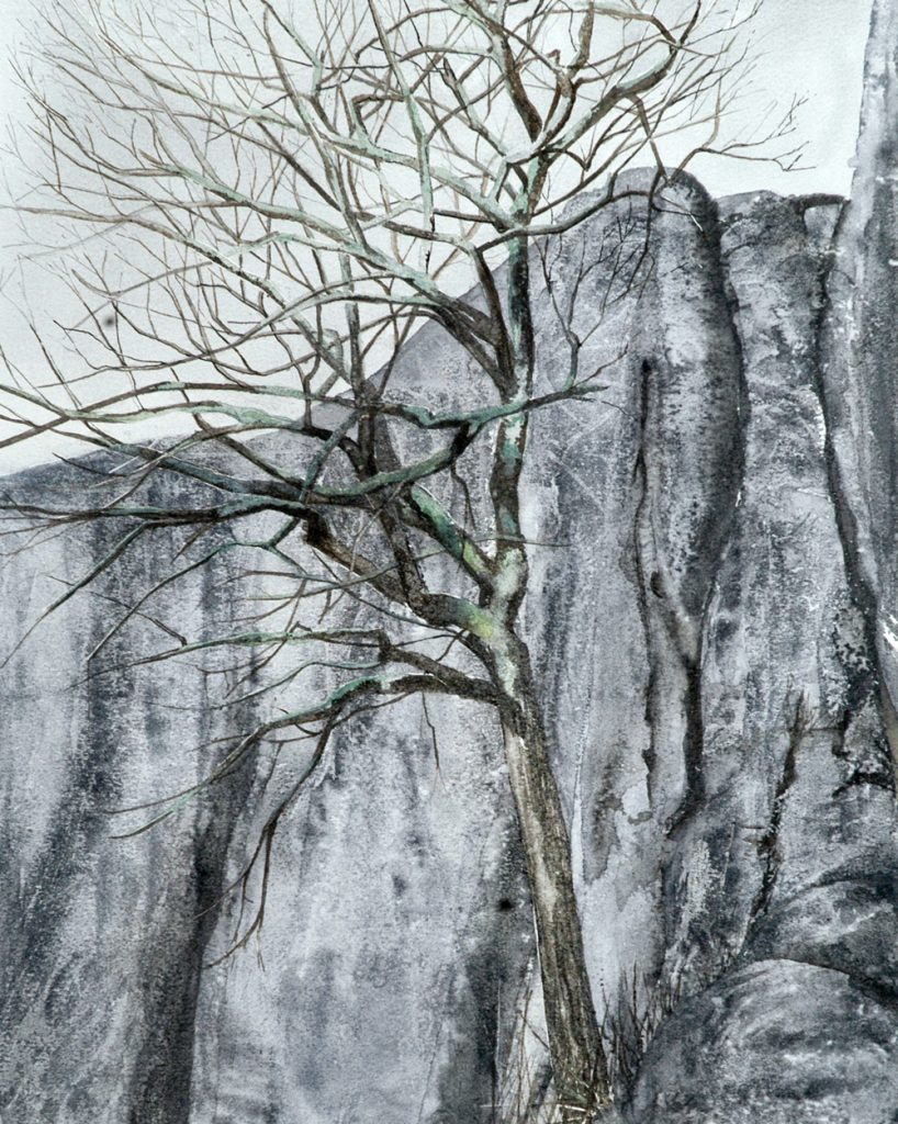 Tree Rock, Lynda Clark, Artist