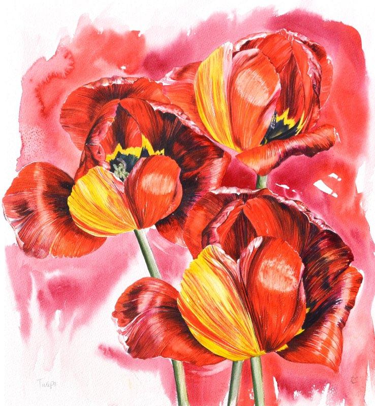 Tulips, Lynda Bird Clark
