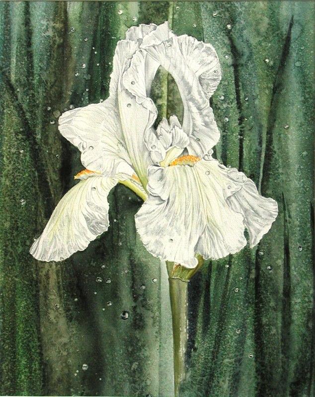 Wet Iris 28.5 x 37.5cms, Lynda Bird Clark