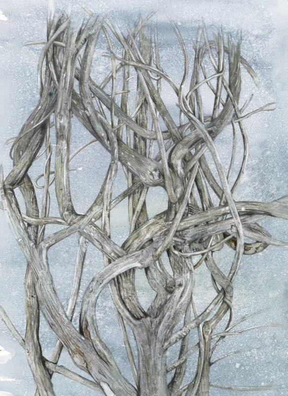 Wisteria 51x70cms, Lynda Bird Clark