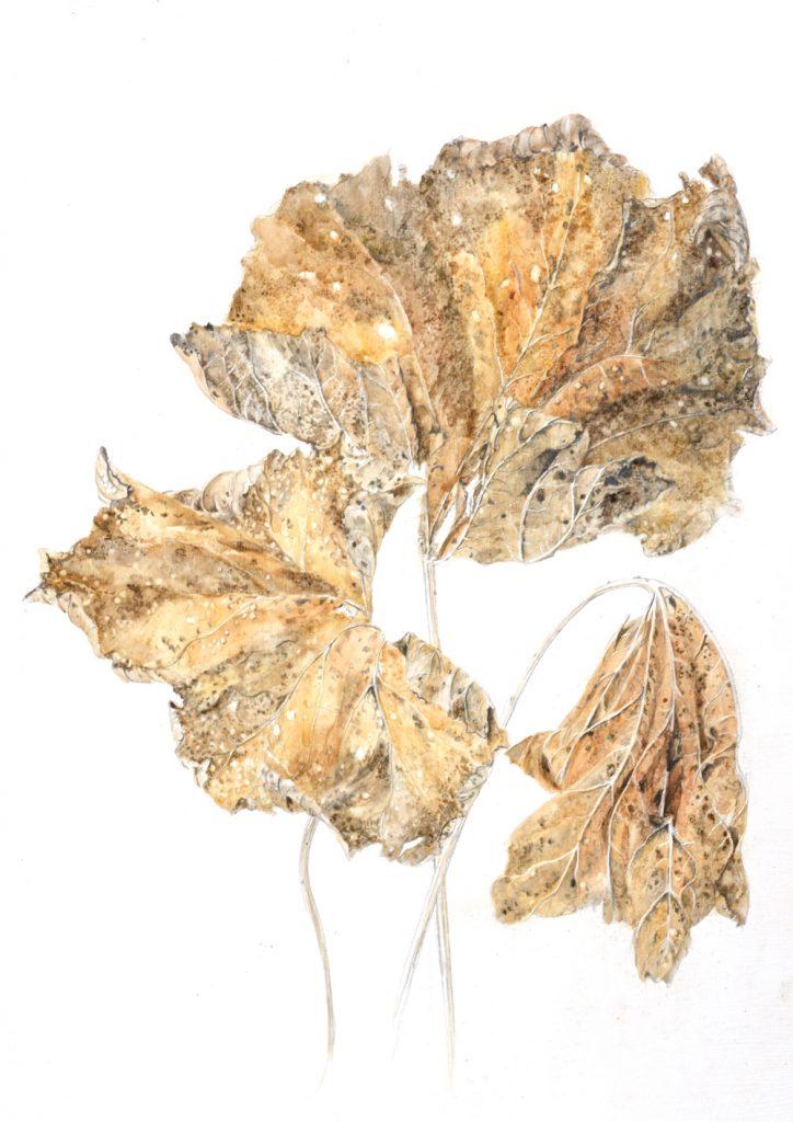 Hollyhock Leaves, Lynda Bird Clark