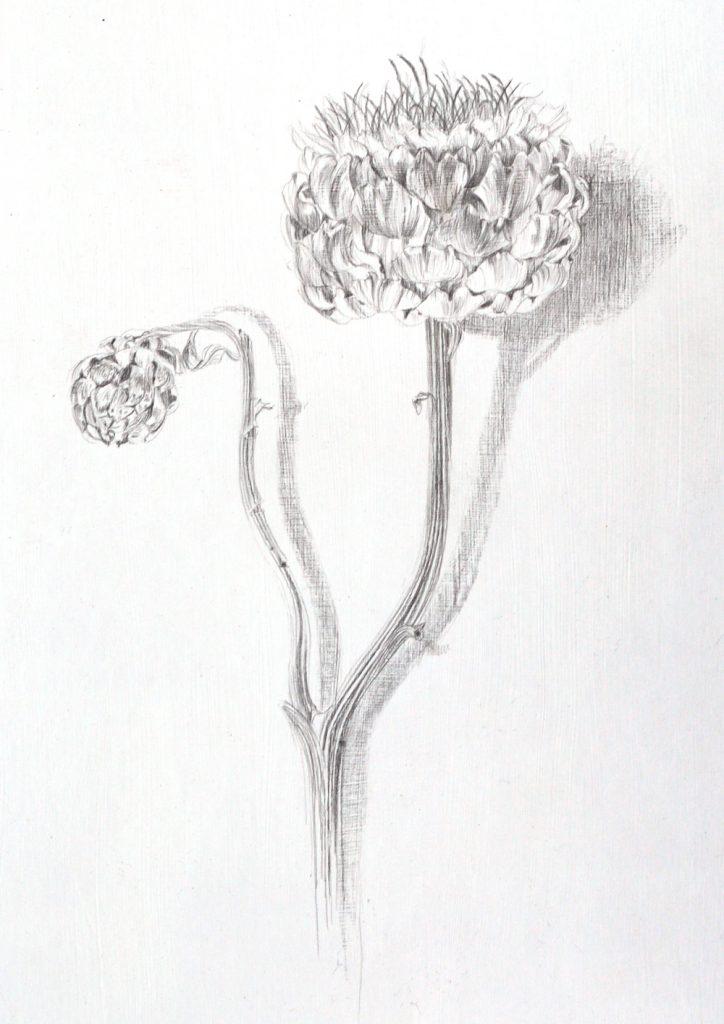 Jerusalem Artichoke, Lynda Bird Clark