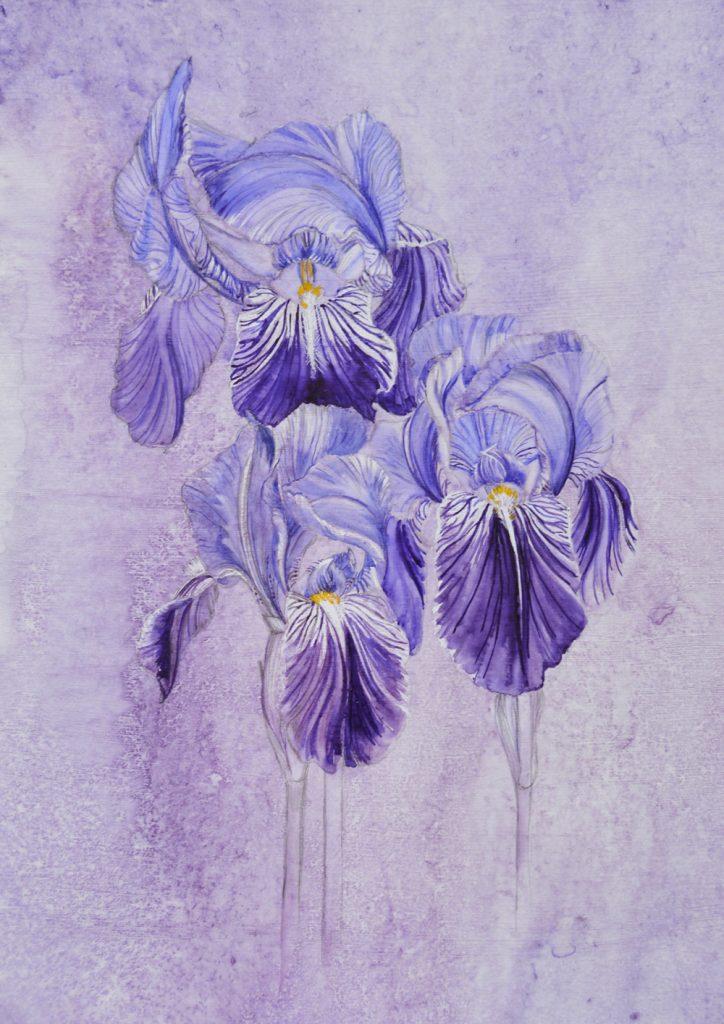 Silverpoint Iris, Lynda Bird Clark